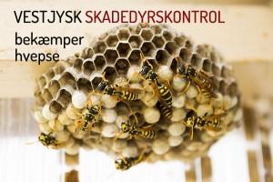 Bekæmpelse af hvepse- fjern hvepsebo Holstebro Ringkøbing