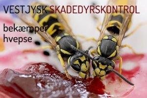 Hvepsebekæmpelse Holstebro, Ringkøbing, Skjern og omegn