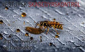 Hvepsebekæmpelse Holstebro ringkøbing Skjern Hvide Sande