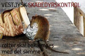 Rottebekæmpelse Ringkøbing, Holstebro, Skjern, Hvide Sande
