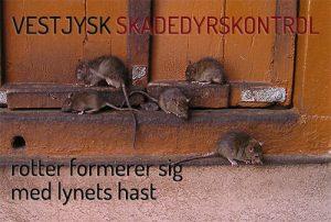 Rottebekæmpelse Ringkøbing Skjern Hvide Sande Holstebro