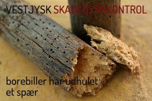 bekæmpelse af borebiller - huller i træ - spær - tagkonstruktion