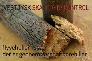 borebillebekæmpelse - huller i spær - huller i træ fra borebiller