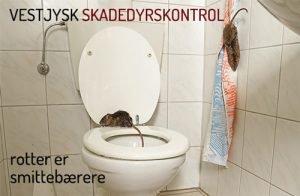 bekæmpelse af rotter - smittefare og bakterieoverførsel