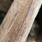 huller fra borebiller i spær og tagkonstruktion