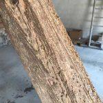huller i træ fra borebiller -