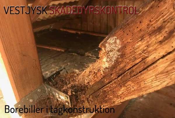 bekæmpelse af borebiller i tagkonstruktion